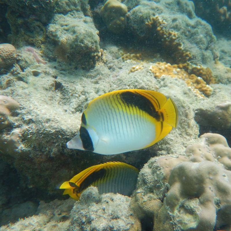 Explore the underwater life at Havelock