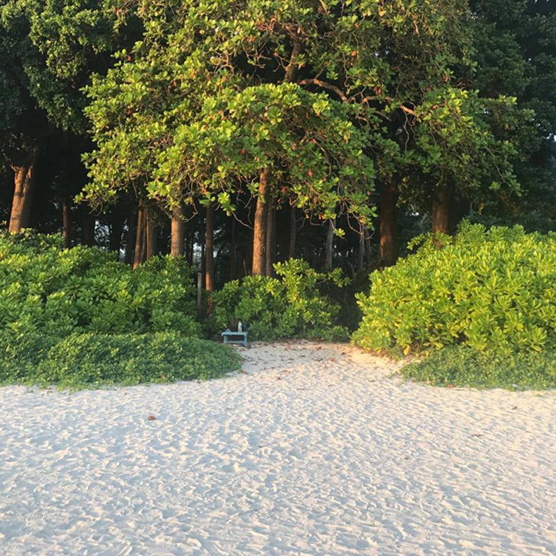The lush green, Neil Island